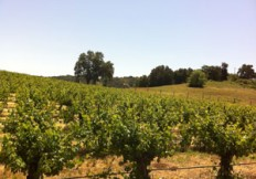vineyard listings
