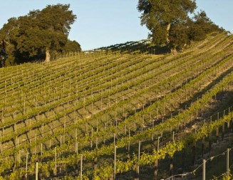 Foreign investors show interest in Paso Robles wine industry