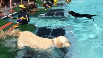 Dog-splash