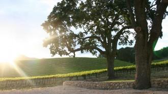 HammerSky Vineyard is located at 7725 Vineyard Dr. in Paso Robles.