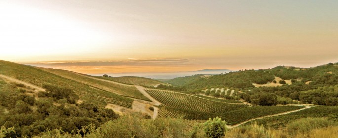 Sunrise over HMR vineyard