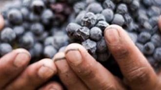 paso-robles-wine-grape-growers