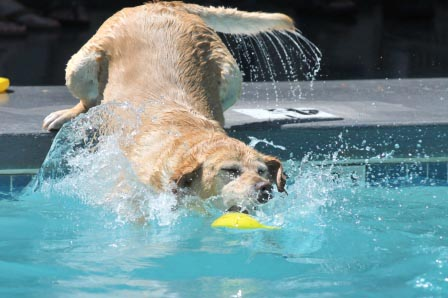 Dog Splash Days 2