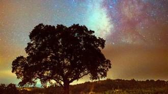 Midnight cellars sky feat