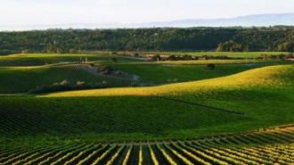 wild horse winery