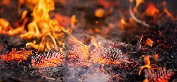 prescribed burn SLO county