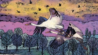 Julie DunnWhooping Cranes