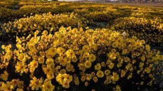 Carizzo-plains-monument