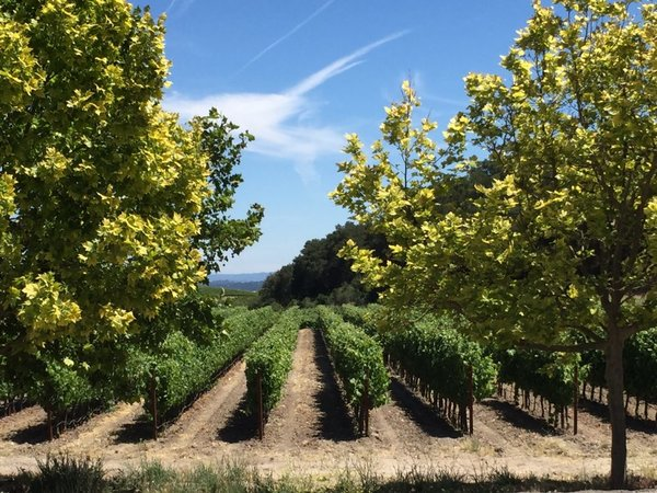 Top 10 Paso Robles wineries