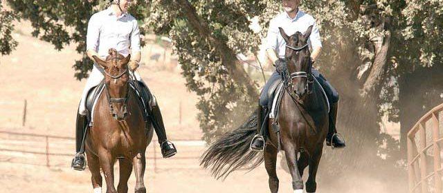 Paso Robles Dressage Summer Classic, Templeton Farms, Paso Robles Horse Park, Ryan Torkkeli, Thomas Walker