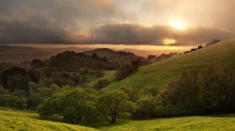 Oak tree protection ordinances