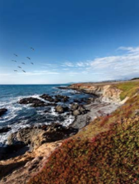 The coast of Cambria.