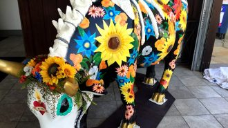 Cowtrina is featured in The Cow Parade, an international public art installation.