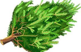 paso-robles-christmas-tree-pick-up