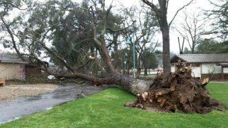 A fallen tree at Atascadero Lake Park. Posted by the City of Atascadero.