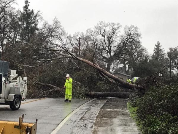 Tree downed Atascdero