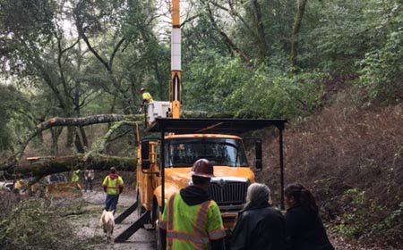 Tree fallen paso robles