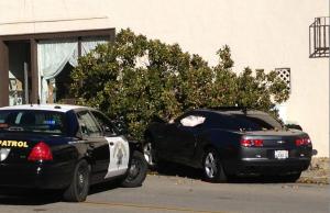 Car hits tree