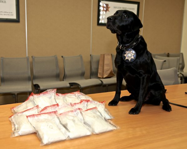 K9 Jack helped bust a woman accused of transporting 13 pounds of meth.