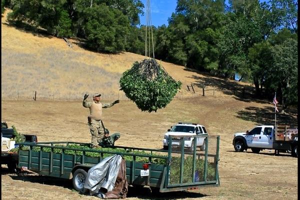 marijuana bust paso robles