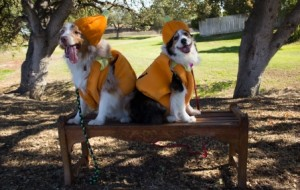 Howl'oween at Sherwood Dog Park