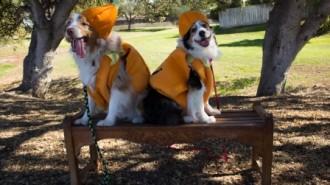 Howl'oween at Sherwood Dog Park