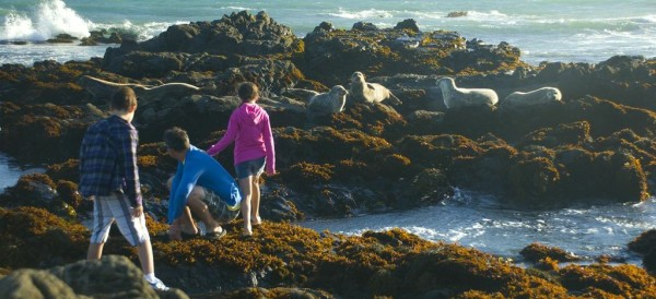 Cambria Inns offers a collection of distinct boutique hotels near Moonstone Beach with its beautiful tide pools.