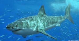 shark san luis obispo