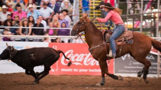 rodeo at Mid State Fair