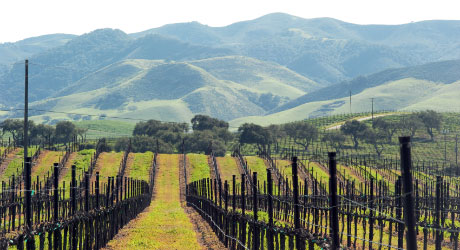 Highlight-PasoRobles-Image