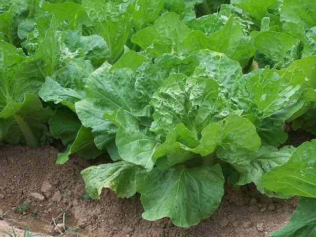 seeds of change garden grants paso robles schools