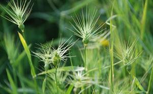 weed abatement