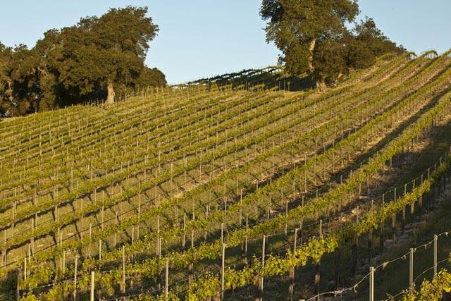 vineyards & wineries, Paso Robles, investors