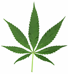 mobile medical marijuana delivery