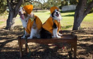 Dog-Halloween-at-Sherwood-park