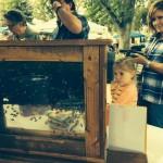 Golden Oak Honey Festival