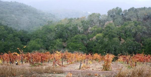 Alta Colina Vineyard.