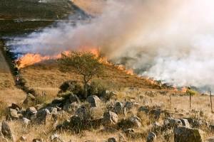 grass-fire