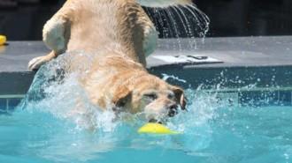 Dog splash days templeton