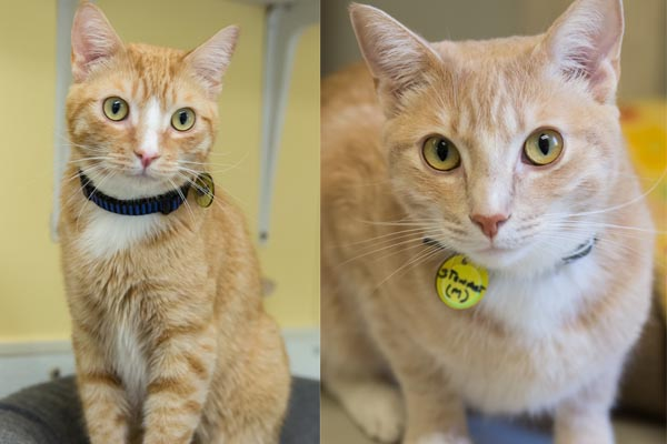 Todd and Stewart are both available for adoption at North County Humane Society.