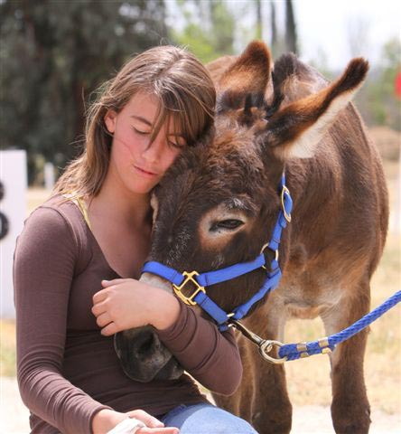 Luv Me Tender miniature donkeys will be on-site at the event. Photo from luvmetenderfarm.com.