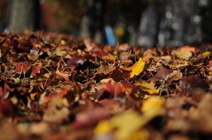 fall leaves clean up paso robles