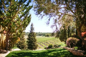 The vines at Cali Paso Vineyard. Photo from yelp.