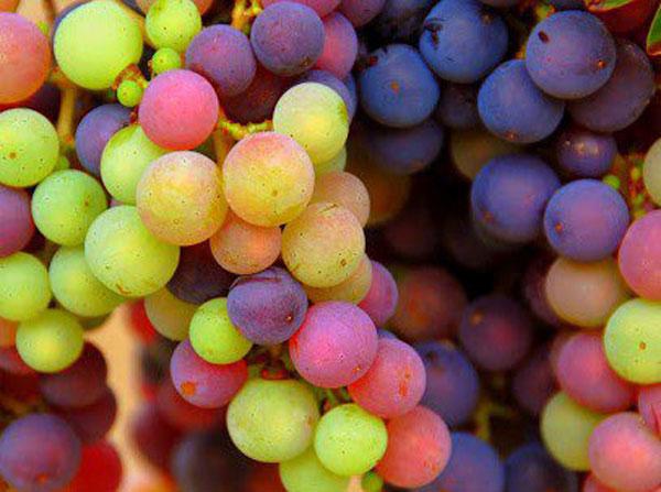 white rhone wines paso robles