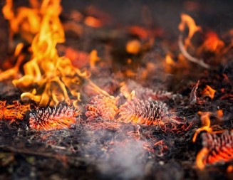 Series of prescribed burns starting today