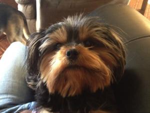 Melody missing dog