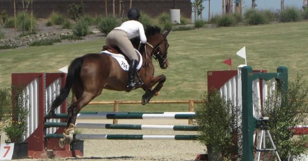 Jumping at horse park