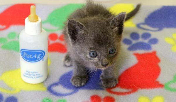 Kitten Header