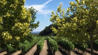 California Winery Advisor released there top 10 Paso Robles wineries to visit. Photo of L'Aventure Vineyards.