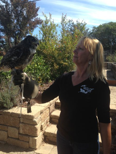 Pacific Wildlife Care attendant with wild Owl